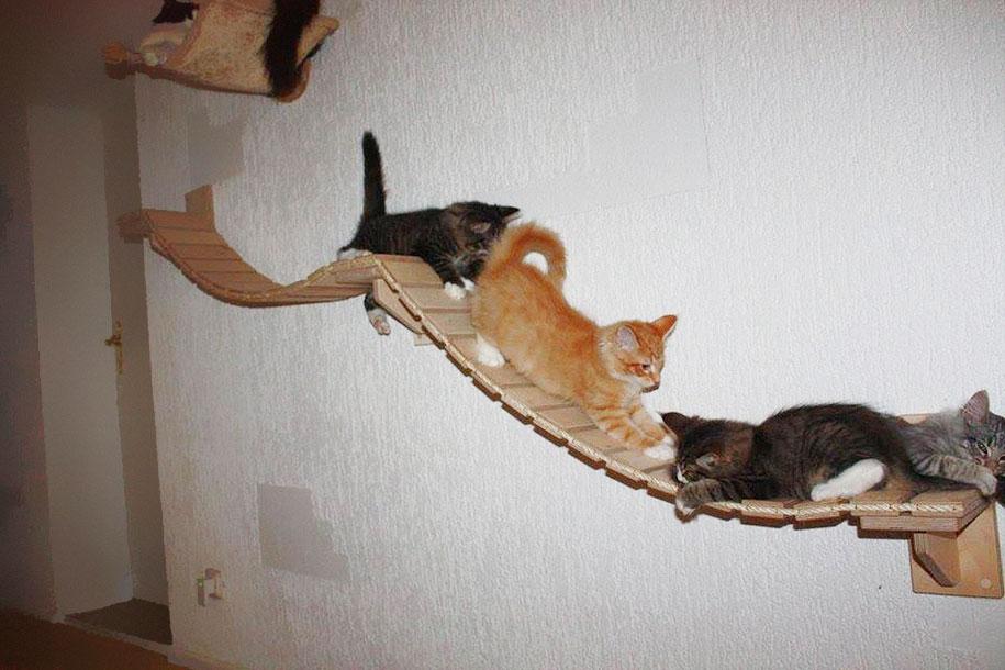 Комната превращенная в детскую площадку для кошек / Rooms Turned Into Cat Playgrounds